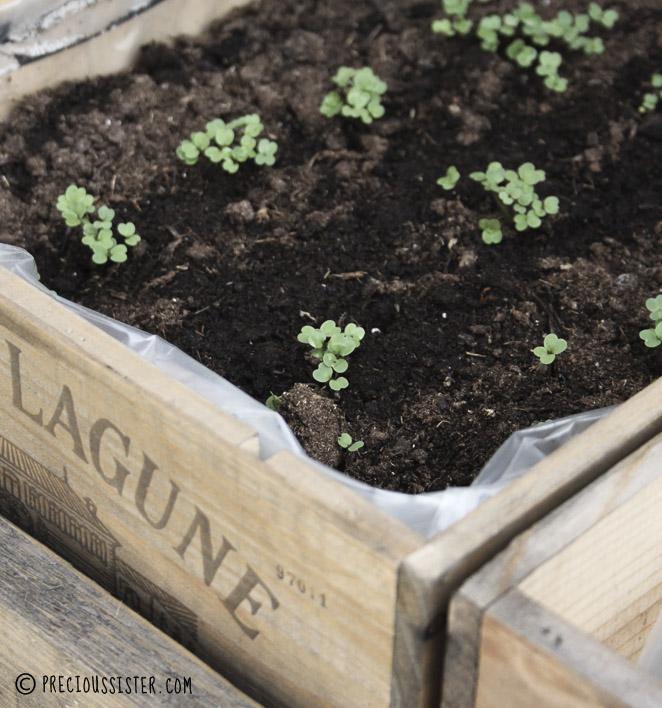 Diy κήπος με βότανα στο μπαλκόνι5
