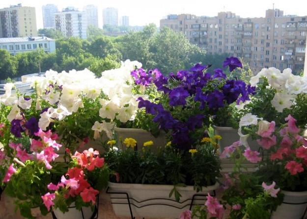 Διακόσμηση μπαλκονιού με λουλούδια10