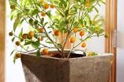 Ιδέες για το πως να μεγαλώστε δέντρα με φρούτα σε γλάστρες