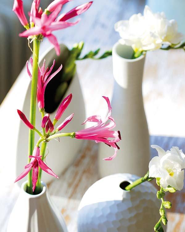 Λουλούδια σε κάθε γωνιά8