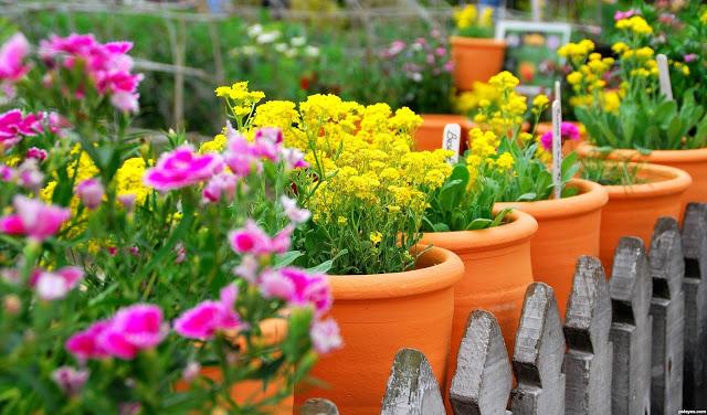 μπαλκόνι-φυτά-λουλούδια31