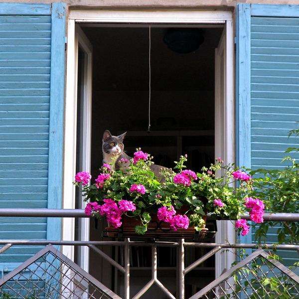Λουλούδια στο μπαλκόνι35