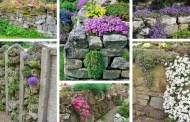 Φυσική πέτρα με φυτά στους αρμούς μια απίθανη DIY ιδέα για να απογειώσετε τον κήπο σας