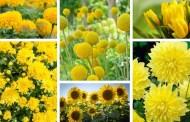 Τα πιο όμορφα κίτρινα λουλούδια για τον κήπο σας