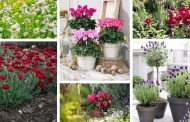 Τα πιο όμορφα λουλούδια για έναν χωριάτικο εξοχικό κήπο ή αυλή