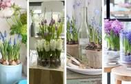 Δημιουργήστε μια μοδάτη ανοιξιάτικη ατμόσφαιρα με διακοσμήσεις βολβών λουλουδιών σε γυάλινα βάζα ή γλάστρες