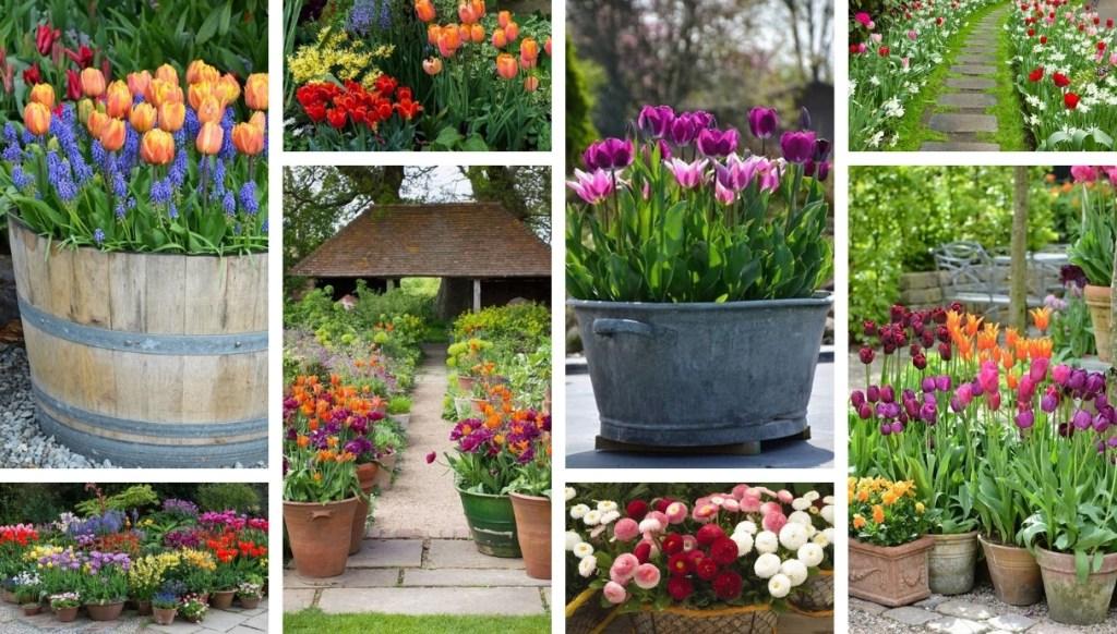 Καλωσορίστε την άνοιξη στην αυλή και τον κήπο σας: 50 πολύχρωμες διακοσμήσεις λουλουδιών που μαγεύουν