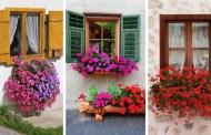 28 Ιδέες με πανέμορφα παράθυρα  διακοσμημένα εξωτερικά με πολύχρωμα, μαγικά λουλούδια