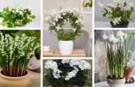 Τα πιο όμορφα φυτά με λευκά λουλούδια για υπέροχους εσωτερικούς χώρους