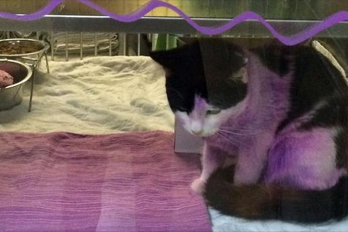 Purple Cat_8616028627938591123