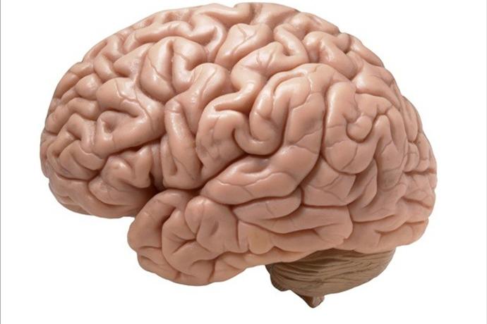 brain_4716715263118952482