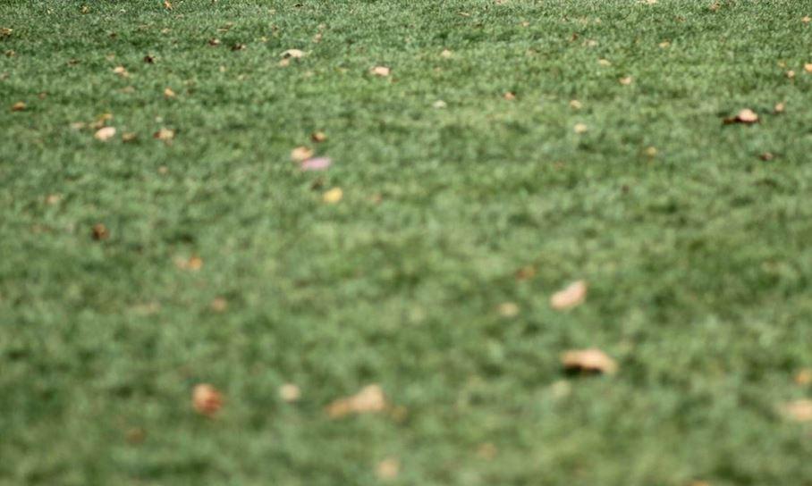 GRASS_1461277558805.JPG