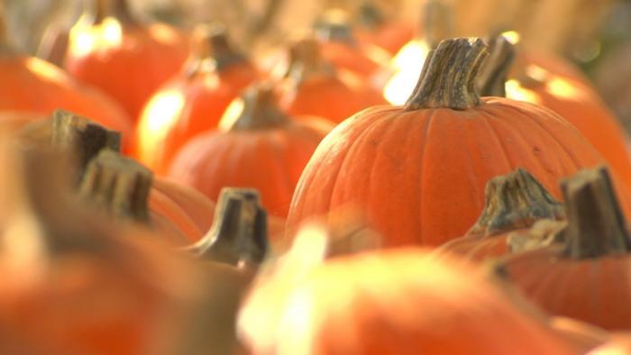 NC_pumpkin1015_700x394_1539719136717.jpg