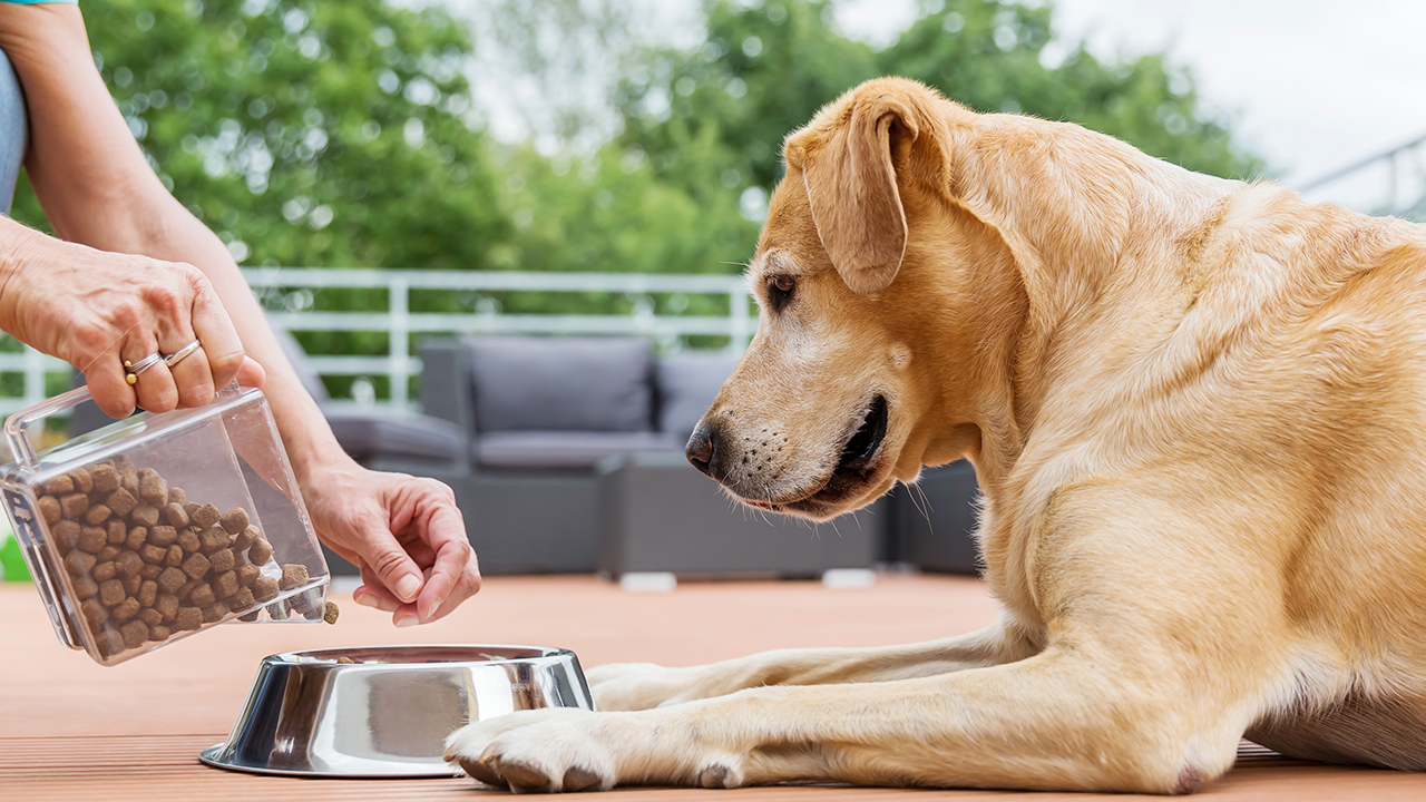 a-person-putting-pet-food-in-a-bowl-and-a-dog-waiting-for-dinner_1542656945520_420176_ver1_20181120055403-159532