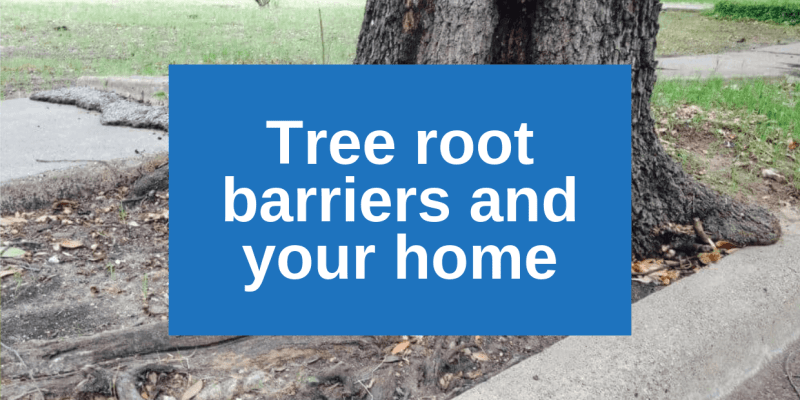 Tree root barriers and your home's foundation