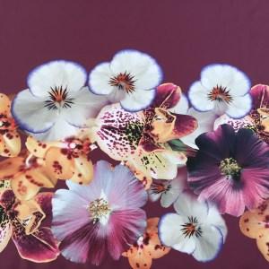 Tafta Duchesse burgundy imprimata digital
