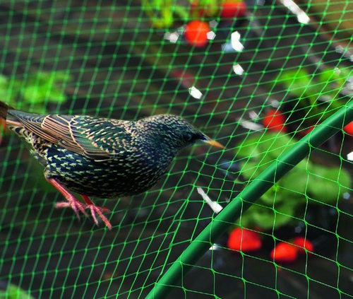 Birds protection net