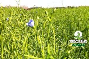 Properties of Flax fibers