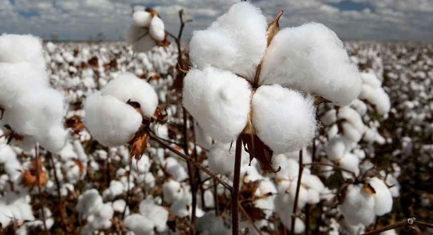 Top ten country by exporting cotton