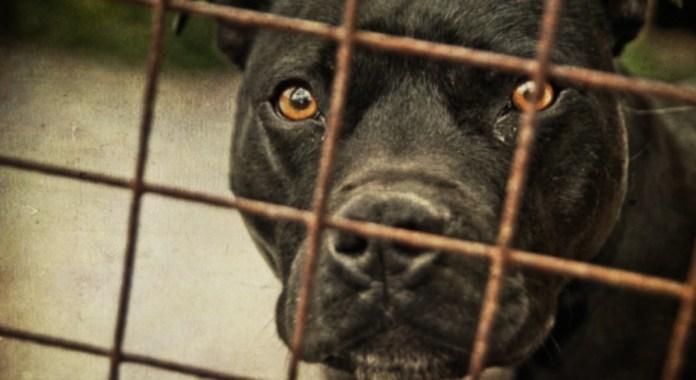 Hombre mantenía alrededor de 80 perros gatos y aves encerrados en Providencia