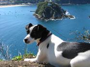 Hund vor der Küste San Sebastiáns
