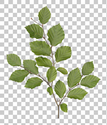 Branches0025 Free Background Texture plant transparent