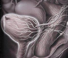 Resultado de imagen de fotos vejiga esclerosis multiple