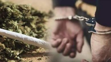 Delhi Police seizes ganja worth Rs 5.50 crore