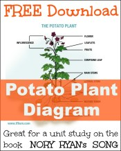 Nory Ryan's Song Potato Plant Unit Study