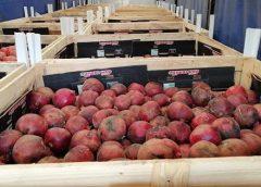 Controlli agroalimentari – Palermo, respinto carico di melograni tunisini