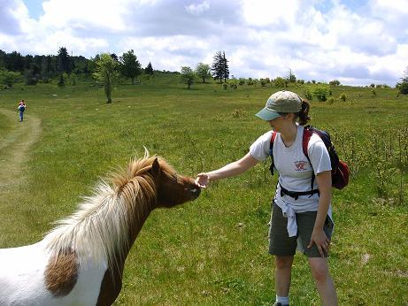 Vicky Pets Pony