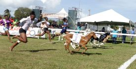 The race had already been won but it was a tight finish for second in the female jockeys race.