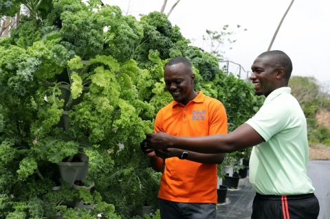 Garrett McKellar of Tropical Island Greens shows Chief Secretary Hon. Ancil Dennis the hydroponics and other methods used to grow kale and seasonings on his farm at Richard Trace, Concordia.
