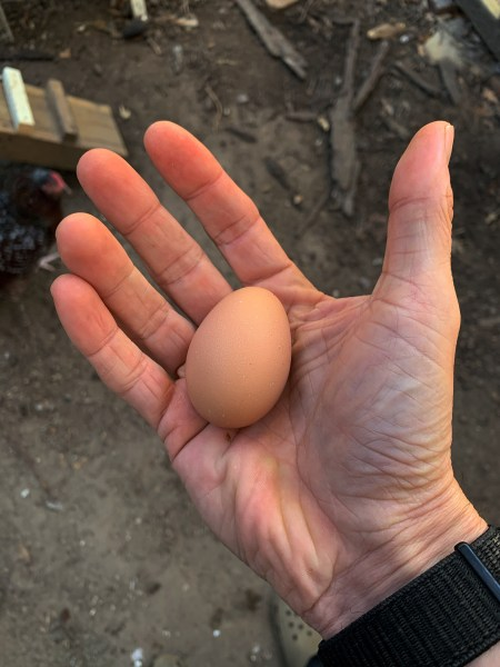 First egg in hand.