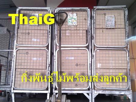 กล่องส่งต้นไม้ ของสวนไทยเซ็นทรัลการ์เด้น