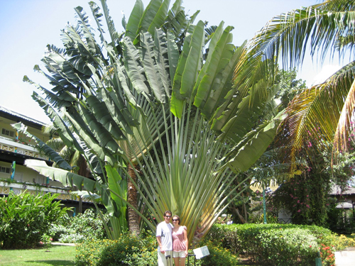 The Traveler S Palm Plants In Thailand Thai Garden Design