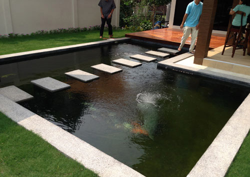 Modern Koi Pond Design
