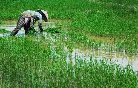 Thailand's cause has not been helped by global rice stocks rising to 12-year highs, making the market sluggish