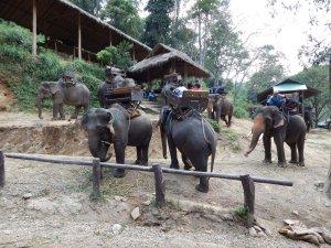 MaesaMaesa elephant camp Chiang Mai