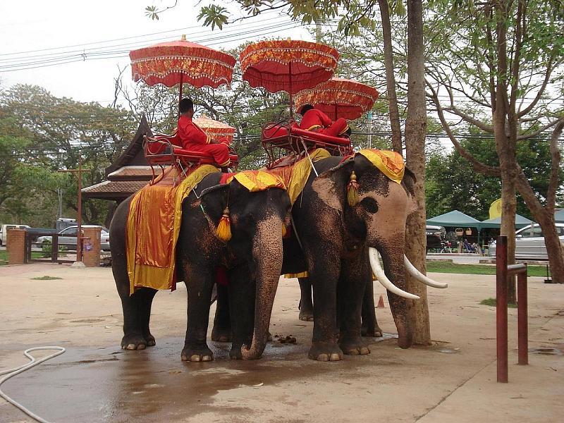 Thailand Elephants A Symbol Of Thai Culture Thailand Discovery