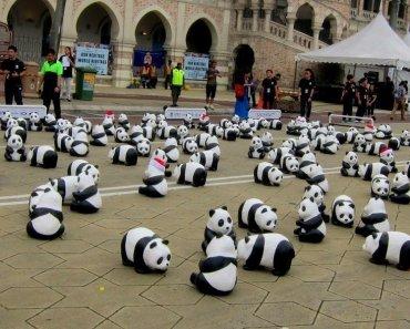 1,600 Pandas World Tour