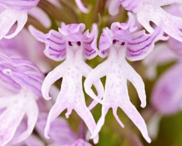 Thailand Info The Rise and Fall of Orchids