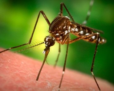 Thailand Dengue symptoms