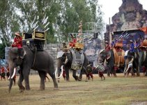 Thailand Surin Elephant Roundup
