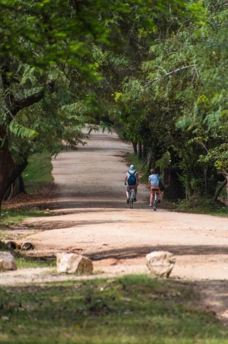 chemin entre temples polonnaruwa - sri lanka