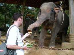Ma rencontre avec Dumbo.