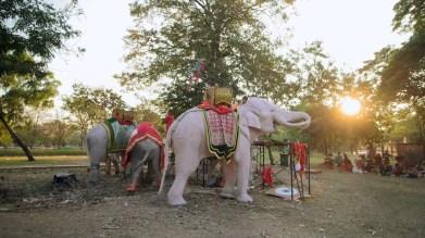 Elephant blanc Ayutthaya.