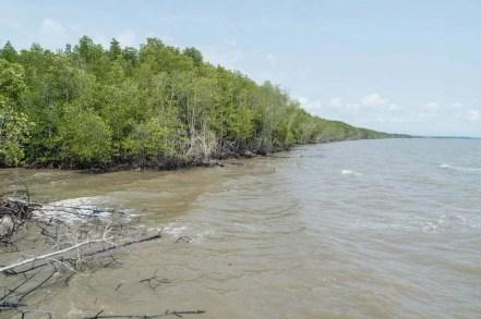 mangrove trat plage noire thailande