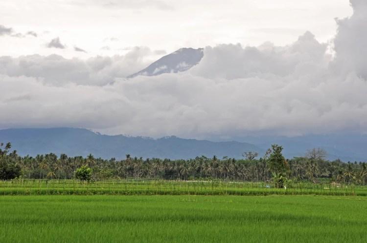 cover java indonesie manque