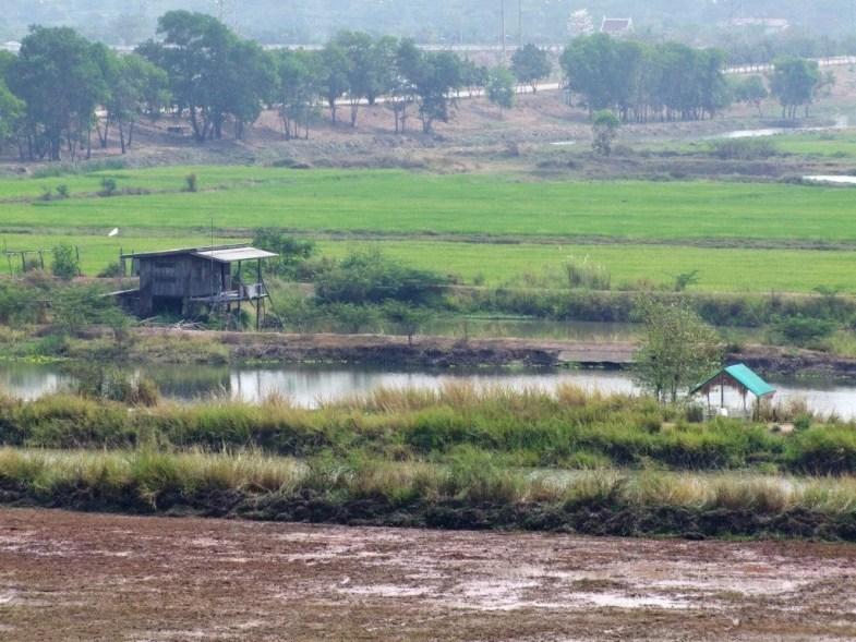 vue campagne Ayutthaya depuis le Wat Phu Khao Thong